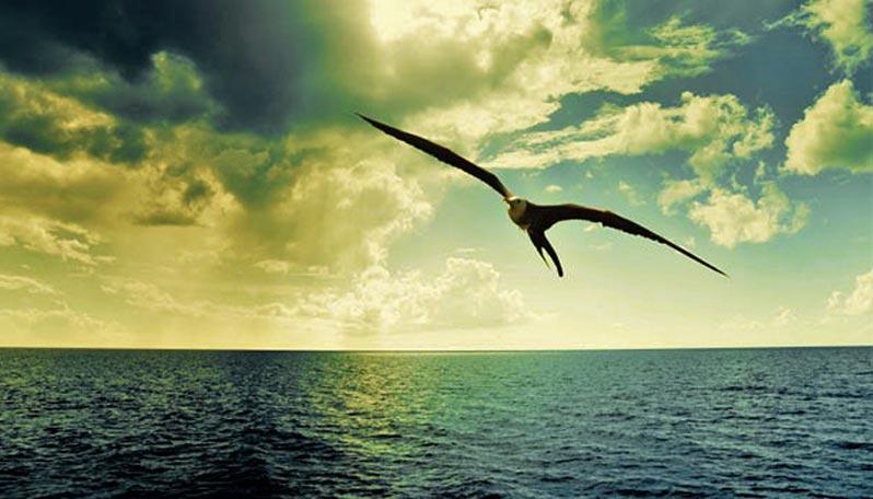 Osare, volare come un albatros